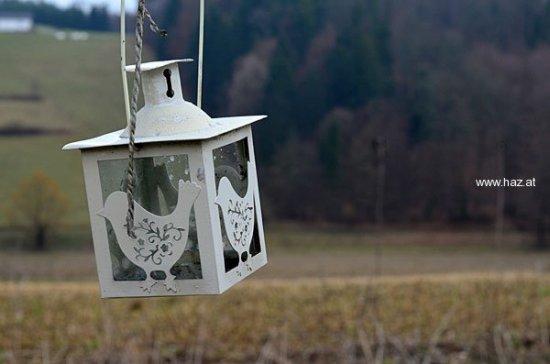 vogellicht